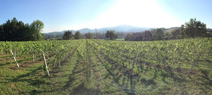 vinogradi u bosni